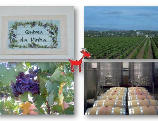 Quinta da Vinha, Sitio da Vala  8300-054 Silves, Portugal Josemanuel.cabrita@hotmail.com Tel: 917236030