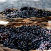 vinho_2012-2