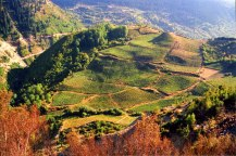 00_metsovo_vineyard_epirus_greece_wines
