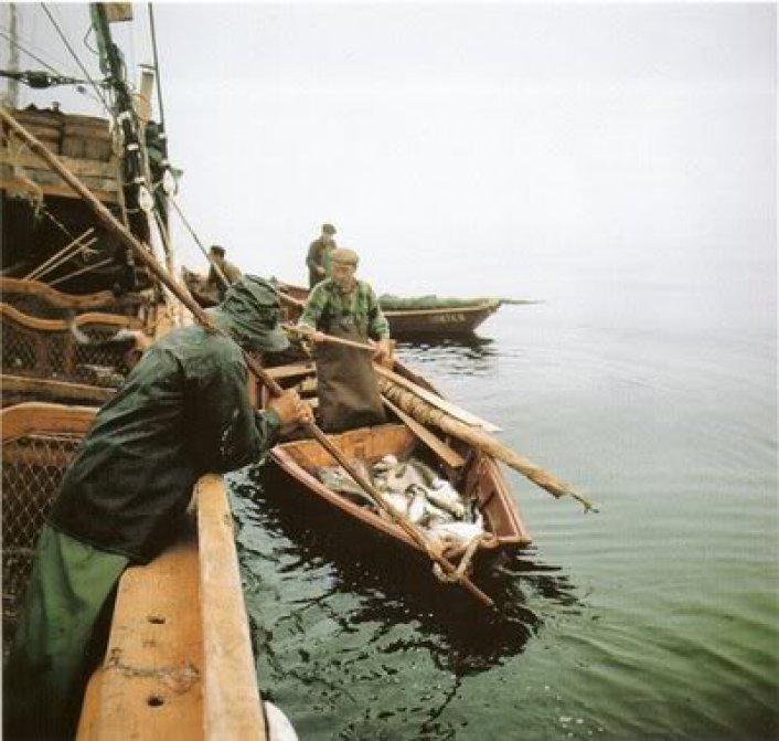 pescadprbacalhoeiro2