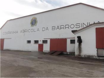 h-barrosinha-8