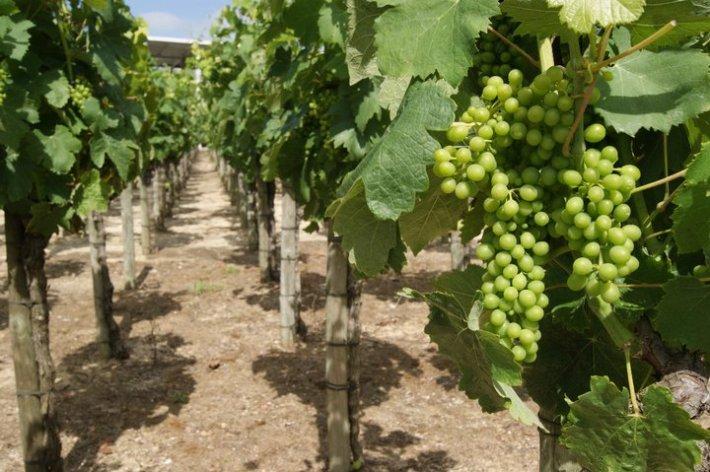 A região de vinhos da Península de Setúbal