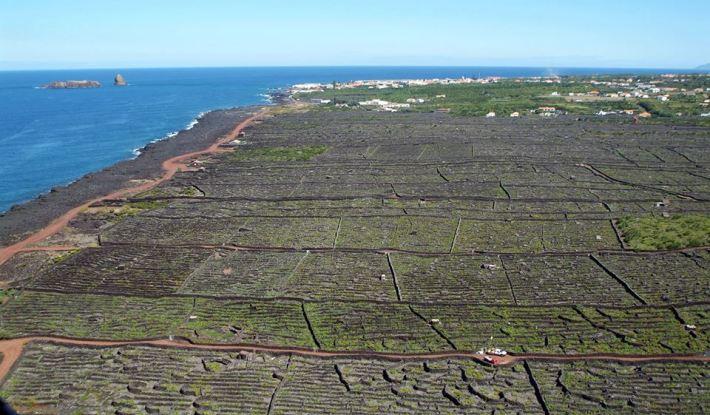 Impressionante imagem das vinhas recortadas pelo mar bem próximo. E mesmo assim é possível termos vinhos.