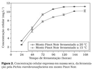 Fermentação Mosto Pinot Noir