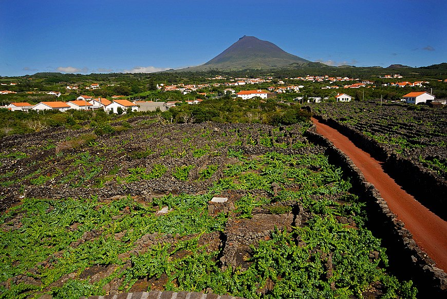 Vinhas do Pico um Património Mundial e Histórico da UNESCO