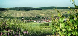 chablis-grand-cru-vineyards-2