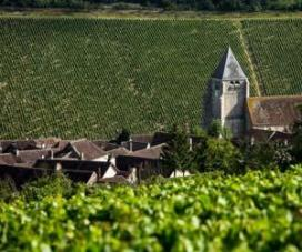 chablis-premier-cru-vineyards-1