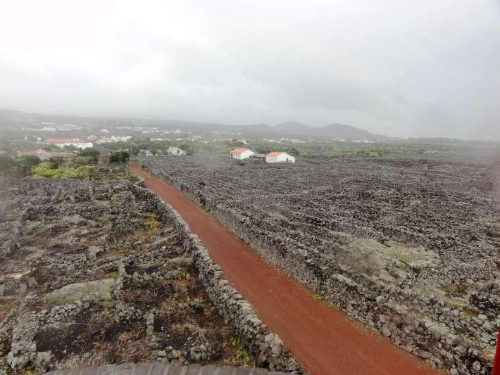 Vinhas do Pico um Partimónio Mundial e Histórico da UNESCO 10