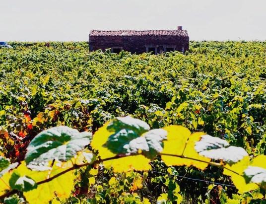 Vinhos da Sub-Região de Castelo Rodrigo - Clique na imagem