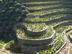 alto-douro-vinhateiro-patrimonio-mundial-17