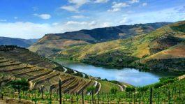 alto-douro-vinhateiro-patrimonio-mundial-22