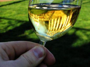 castas-brancas-chardonnay-2