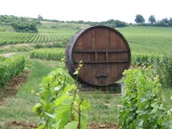 les-vignes-derriere1
