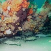 Um peixe de fundo do mar