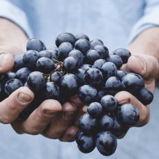 history_grapes_1024x1024
