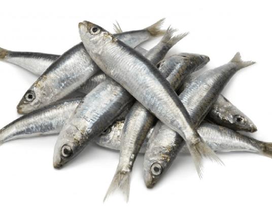 capa-sardinha