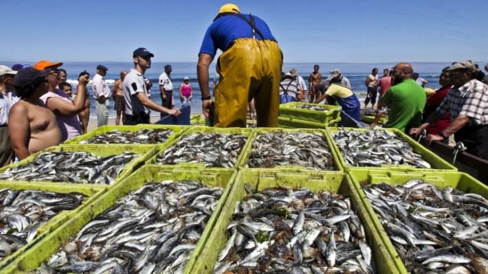 pesca-da-sardinha