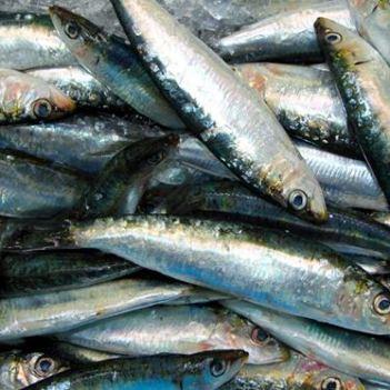 pesca8016acaf_664x373