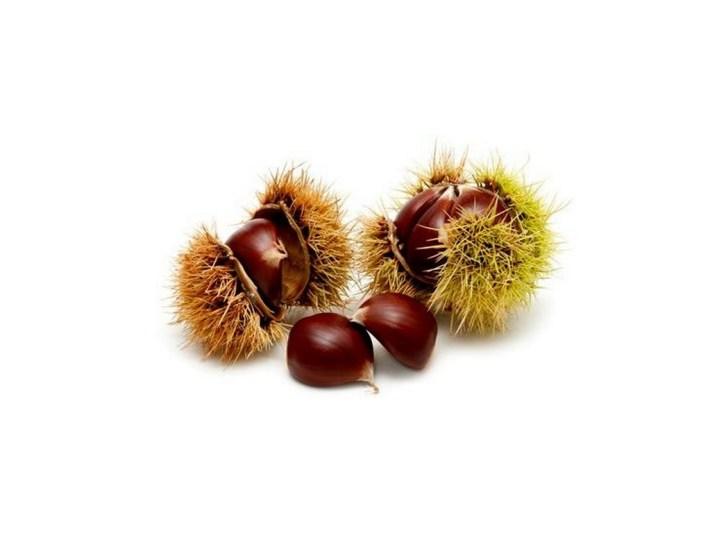 sementes-de-castanheiro