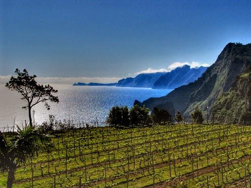 vinhas-ilha-da-madeira