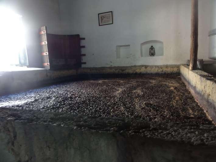 Mosto em Fermentação em lagar tradicional