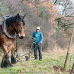 jean-paul-krebs-cheval4