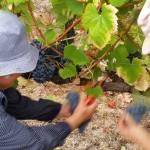 CM Wines TN e Alfrocheiro 5