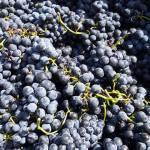 CM Wines TN e Alfrocheiro 6