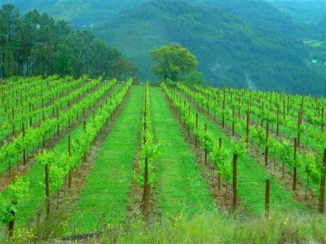 É devido a paisagens como estas que se designa como Região de Vinhos Verdes !