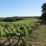 Vinhas de Melon de Bourgogne