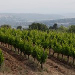 Defends; De Vignes En Vin®