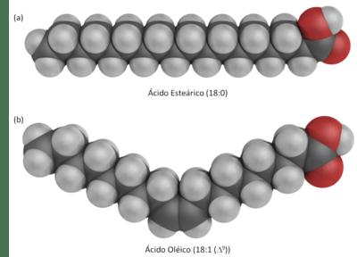 a) Ácidos gordos saturados b) Ácidos gordos insaturados