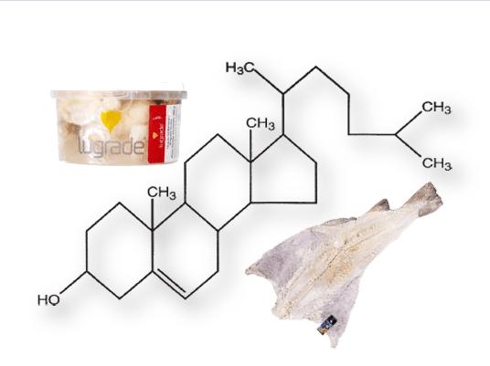 Capa bacalhau Colesterol