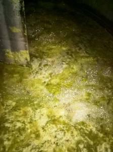 compactaçao decantaçao das borras vamos dar inicio à fermentaçao 2