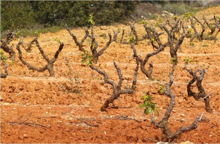 Consumo e produção de vinho durante a ocupação Muçulmana 2