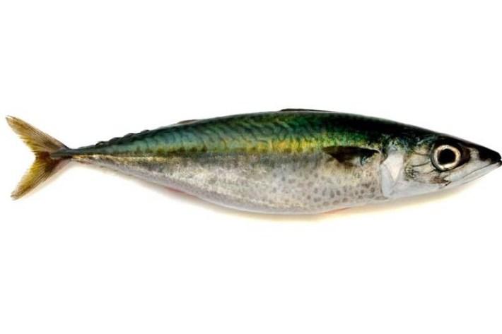 Cavala um peixe azul e baixo em colestrol2