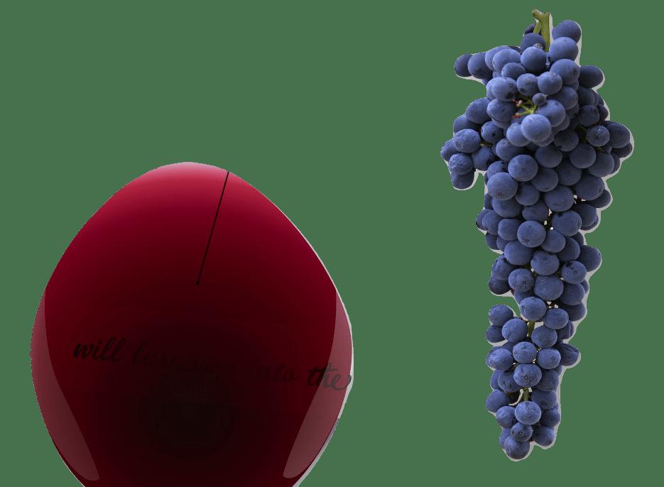A casta tinta Cabernet Sauvignon