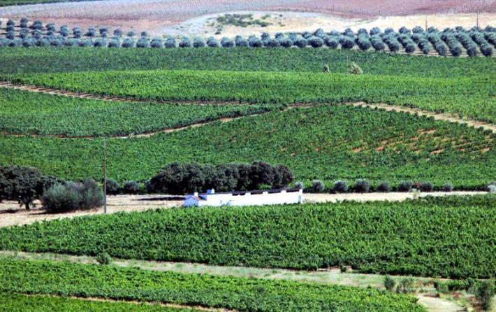 extensos vinhedos na Vidigueira