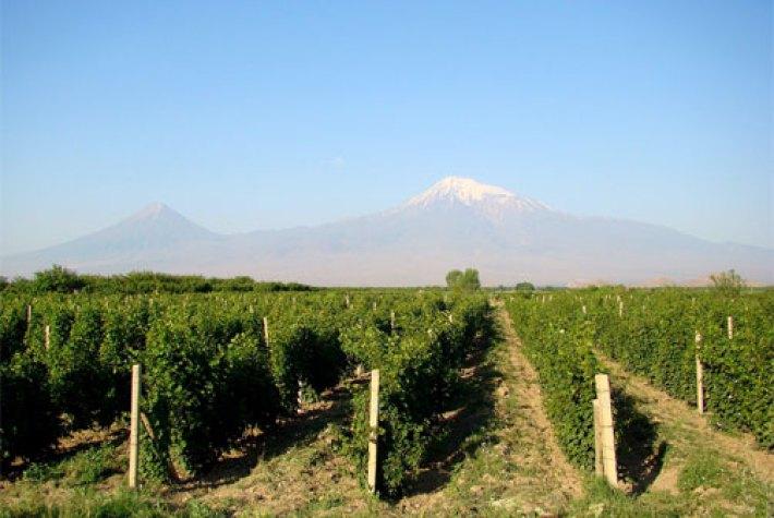 A relação entre o vinho e o cristianismo 9