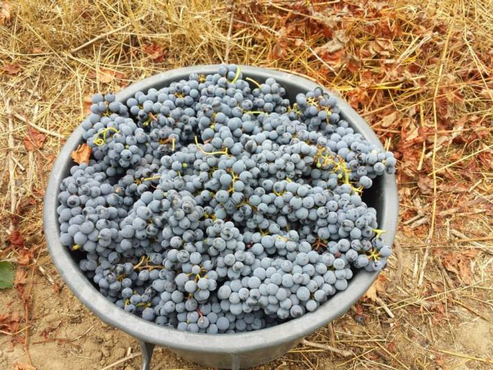 Vinhos com Denominação de Origem Tejo da Sub Região de Almeirim 6