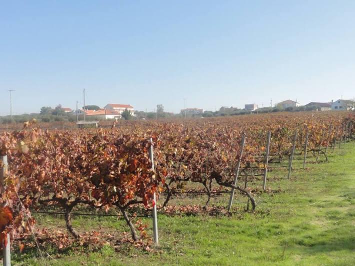 Vinhos DOC da Beira Interior e Sub Região da Cova da Beira 6