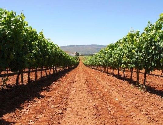 Capa Vinhos da sub região de Borba com Denominação de Origem Alentejo