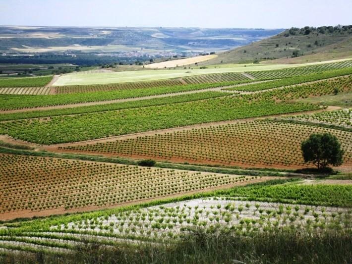 Antonio Banderas um ator que é produtor de vinhos 4