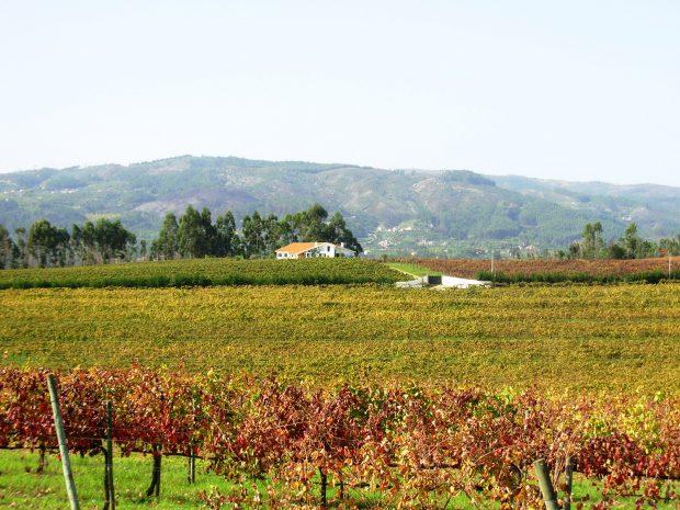 Campos de vinha no Outono