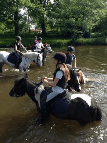 2quitation à poney