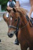 poney mignon