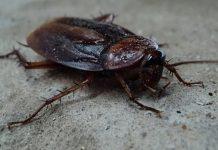 cum scapi de insecte