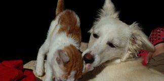 Câinii și pisicile