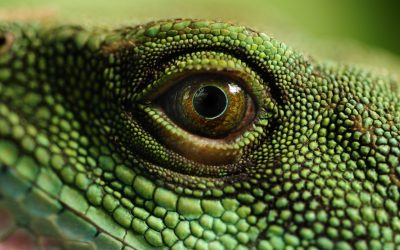 Trial Strategies To Combat The Reptile Theory