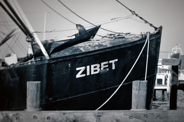 Zibet - Fairhaven, Massachusetts.